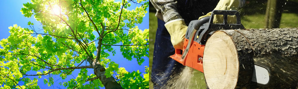 Tree Services Independence